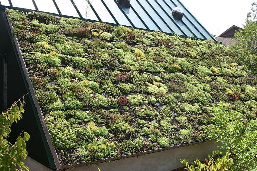 Easy Steps to Creating Your Own DIY Green Roof